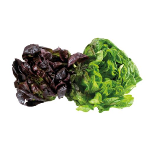 Lechuga salanova bandeja 2 uds